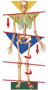 orthotic_skeleto